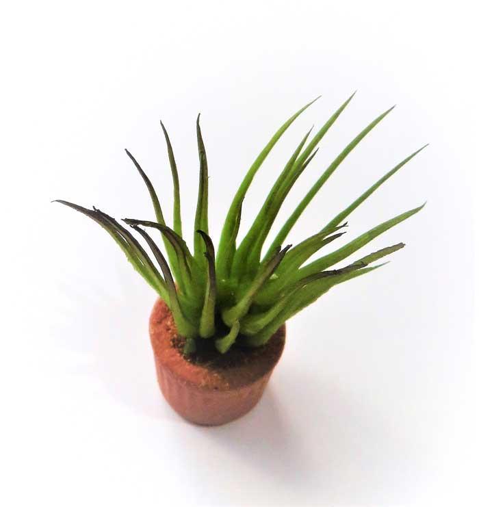 画像2: 観葉植物(銅葉)
