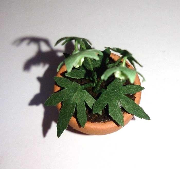 画像2: クリスマスローズ鉢植え 小
