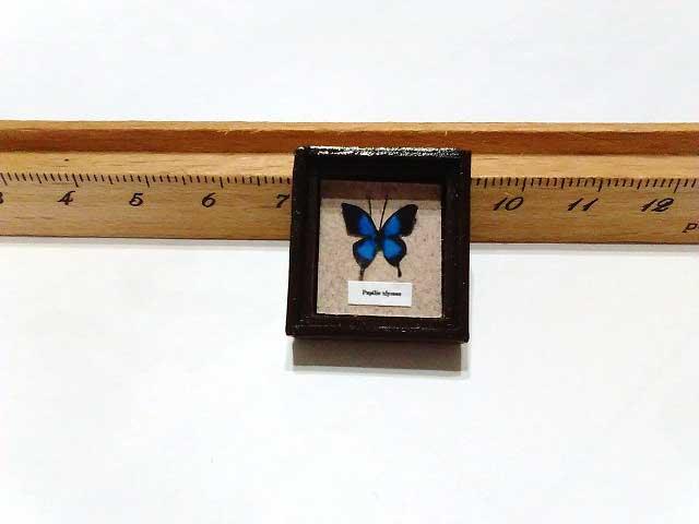 画像1: オオルリアゲハ標本箱