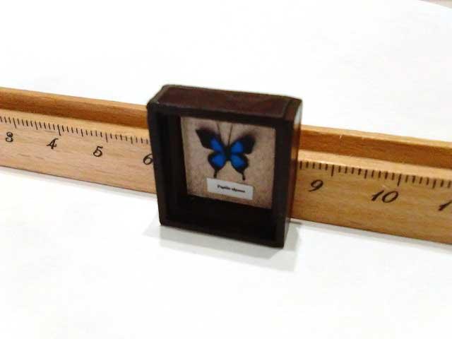 画像2: オオルリアゲハ標本箱