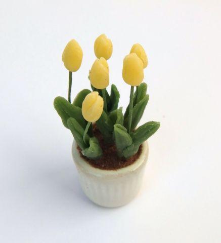 画像1: チューリップ鉢植え