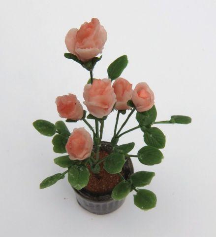 画像2: バラ鉢植え(特価)