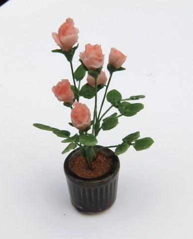 画像1: バラ鉢植え(特価)