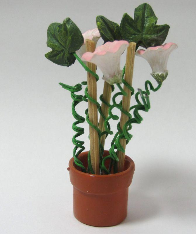 画像2: 朝顔鉢植え(特価)