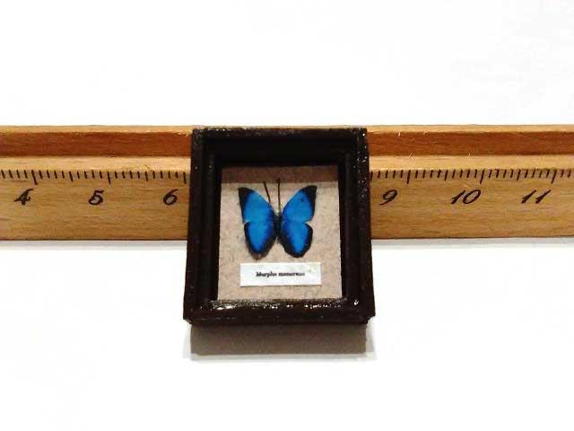 画像1: モルフォ蝶標本箱