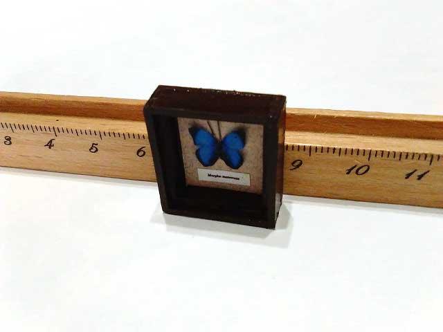 画像2: モルフォ蝶標本箱