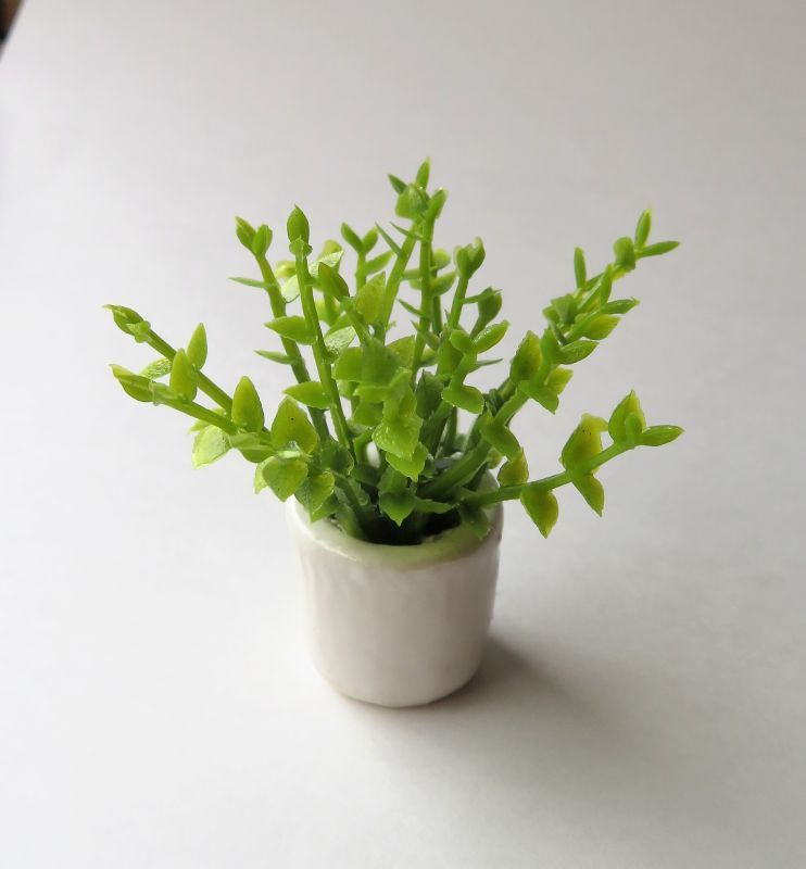 画像1: 観葉植物・丸葉
