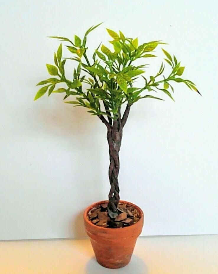 画像1: スタンダード仕立ての観葉植物