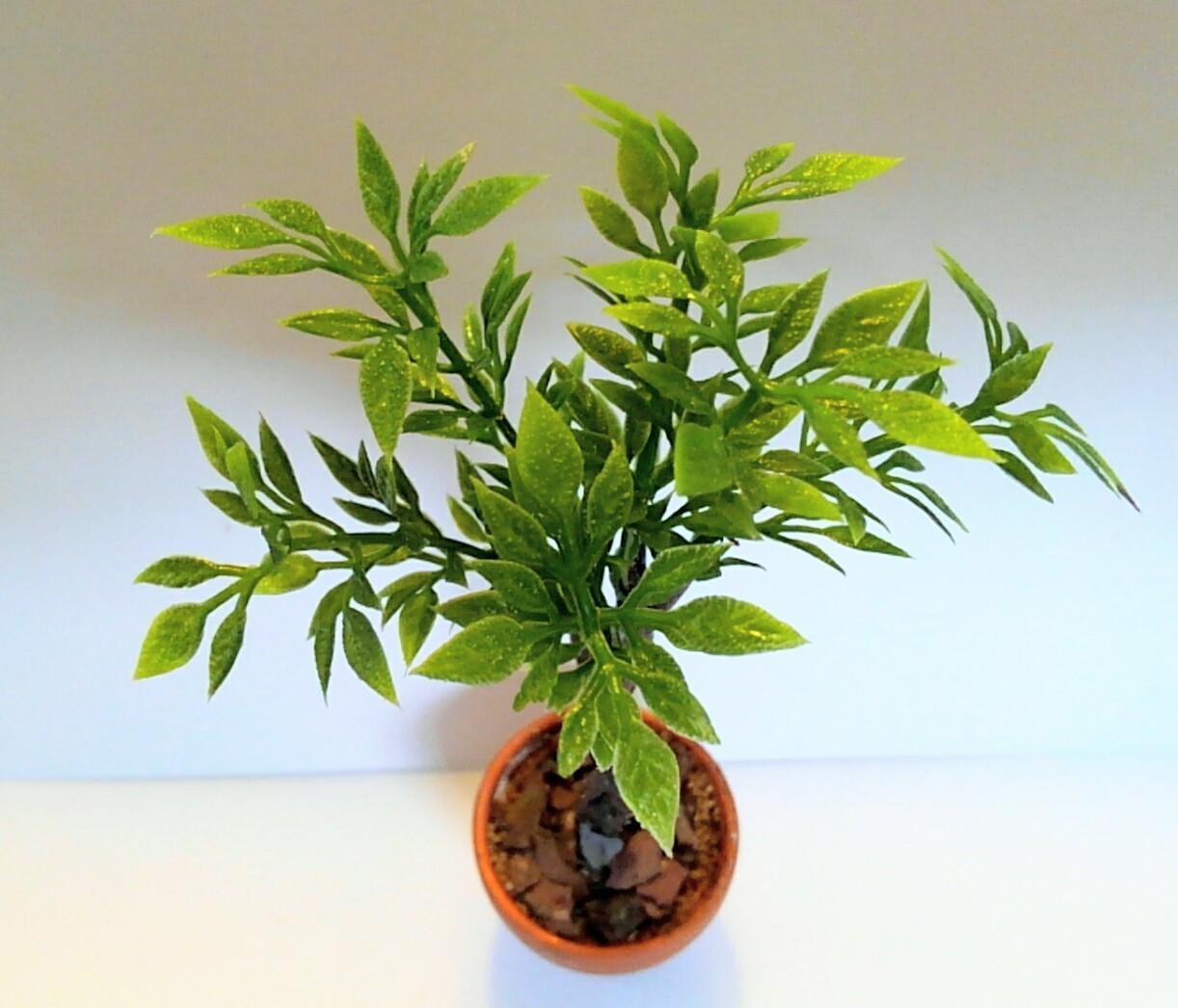 画像2: スタンダード仕立ての観葉植物