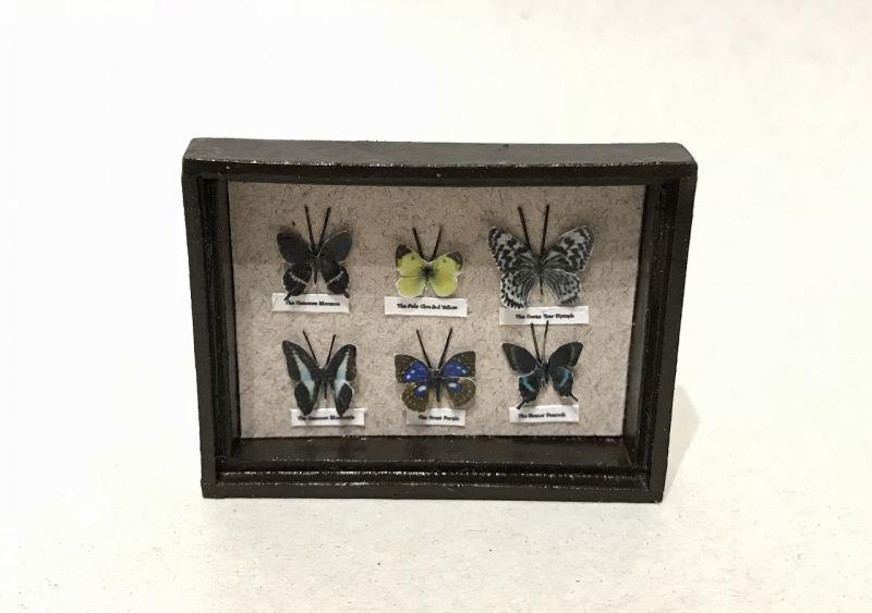 画像1: 蝶標本箱A(日本の蝶)