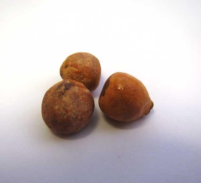 画像3: 玉ねぎ1個