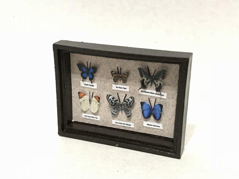 画像2: ミニチュア蝶の標本箱B(モリフォ他全6種)