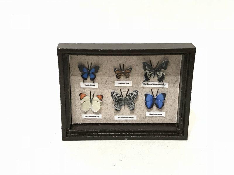 画像1: ミニチュア蝶の標本箱B(モリフォ他全6種)