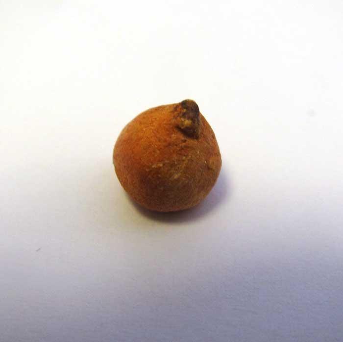 画像2: 玉ねぎ1個