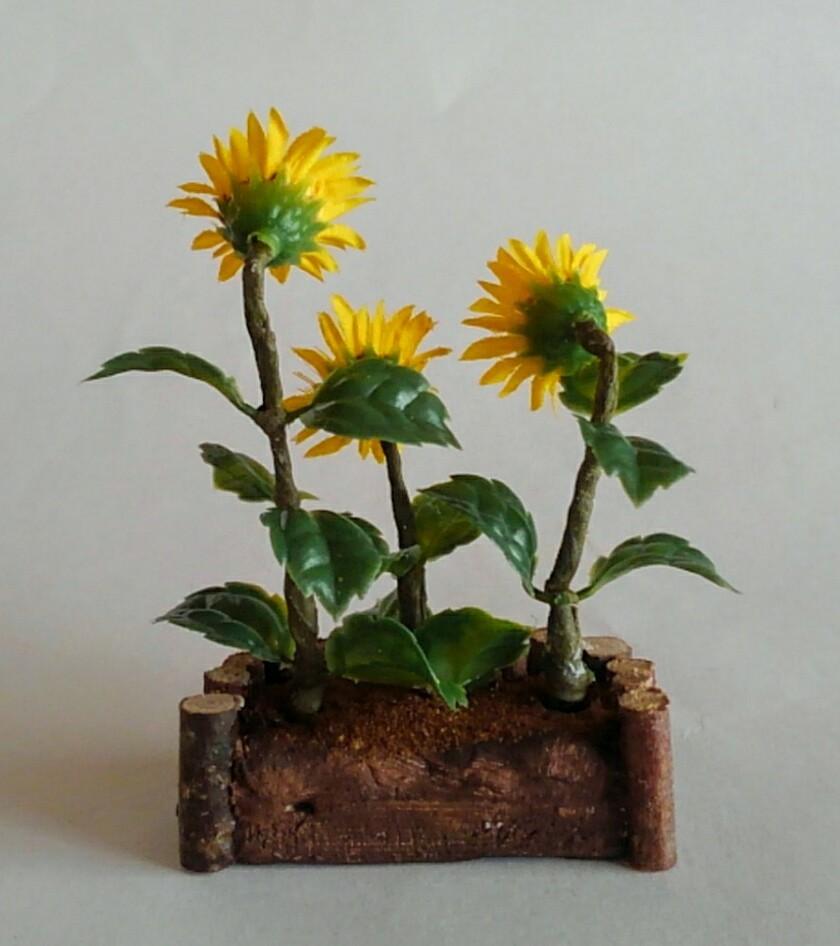 画像3: ひまわりの花壇