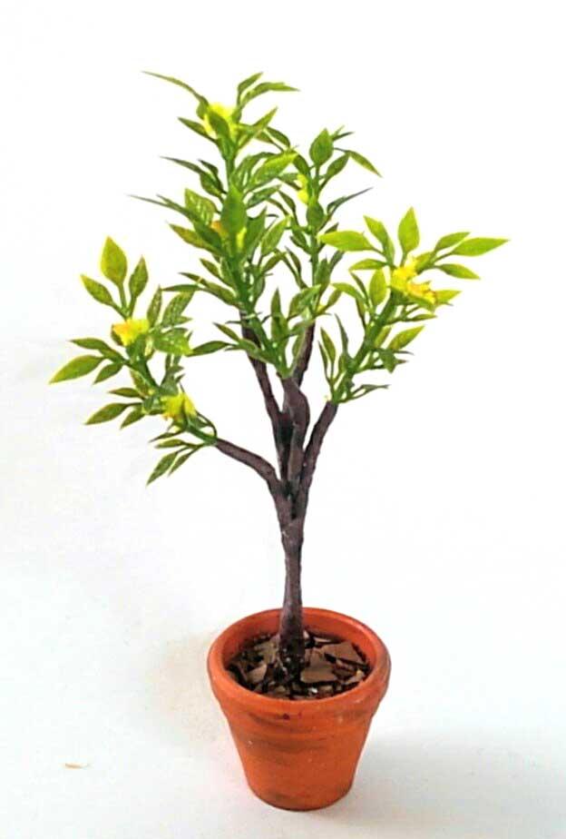 画像1: 小さな黄色い花が咲く植木