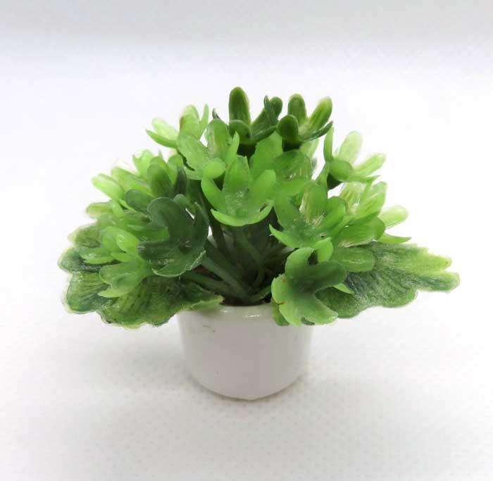 画像1: 緑花鉢