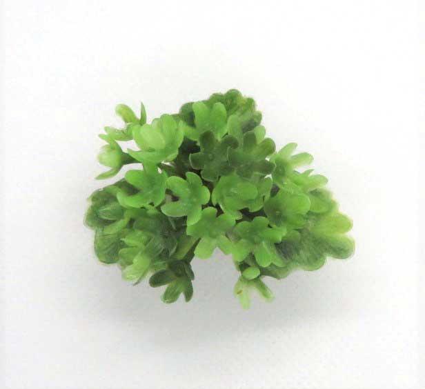画像2: 緑花鉢