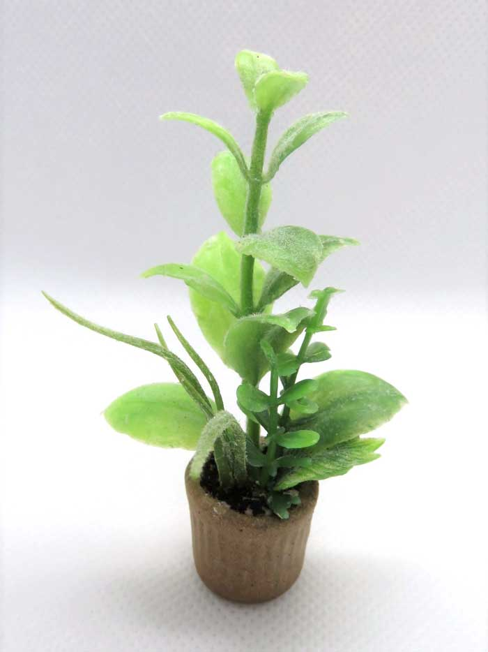 画像1: 観葉寄せ植え