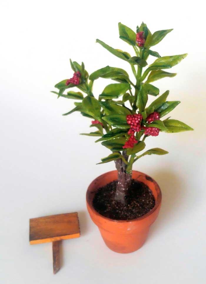 画像2: 赤い実のなる小さな植木