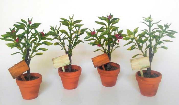 画像4: 赤い実のなる小さな植木