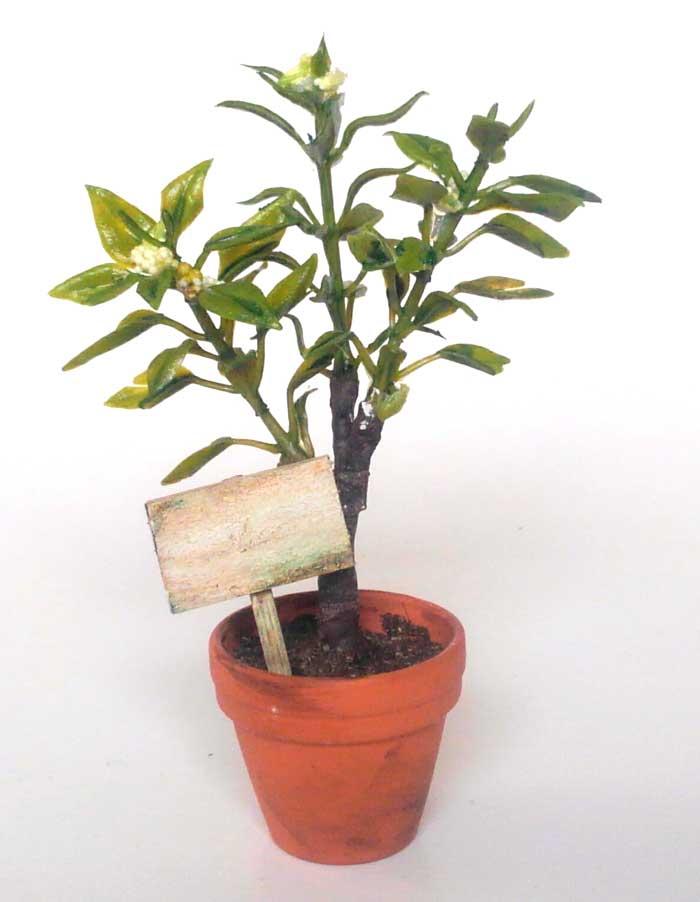画像1: 白い実のなる小さな植木
