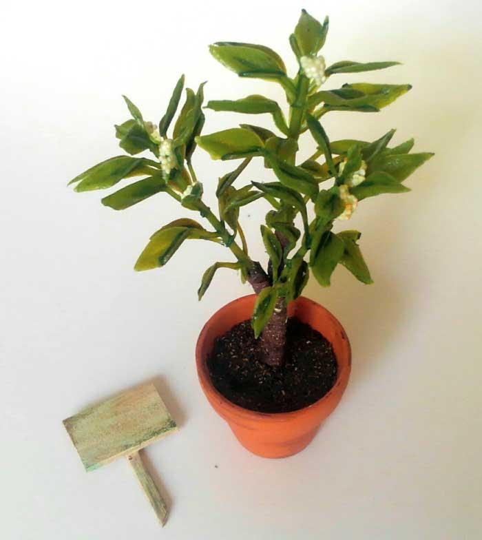 画像2: 白い実のなる小さな植木