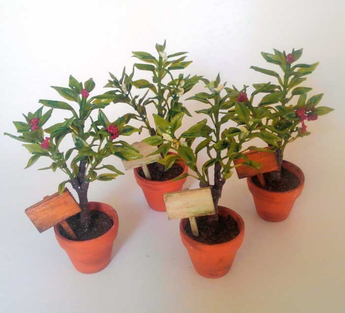 画像3: 赤い実のなる小さな植木