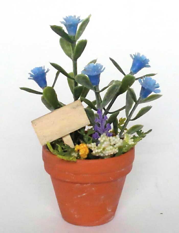 画像1: 青いお花の鉢植え