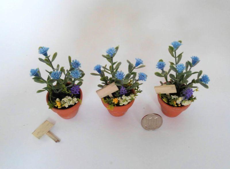 画像2: 青いお花の鉢植え