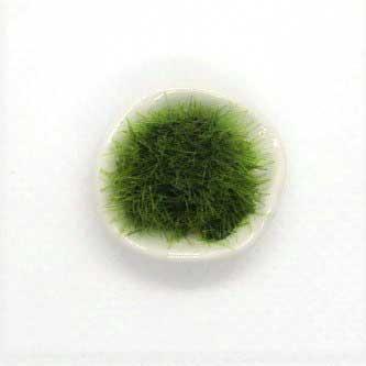 画像2: 苔鉢・白