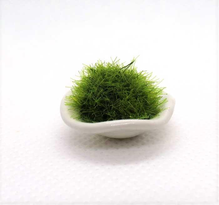 画像1: 苔鉢・白