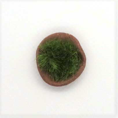 画像2: 苔鉢・テラコッタ