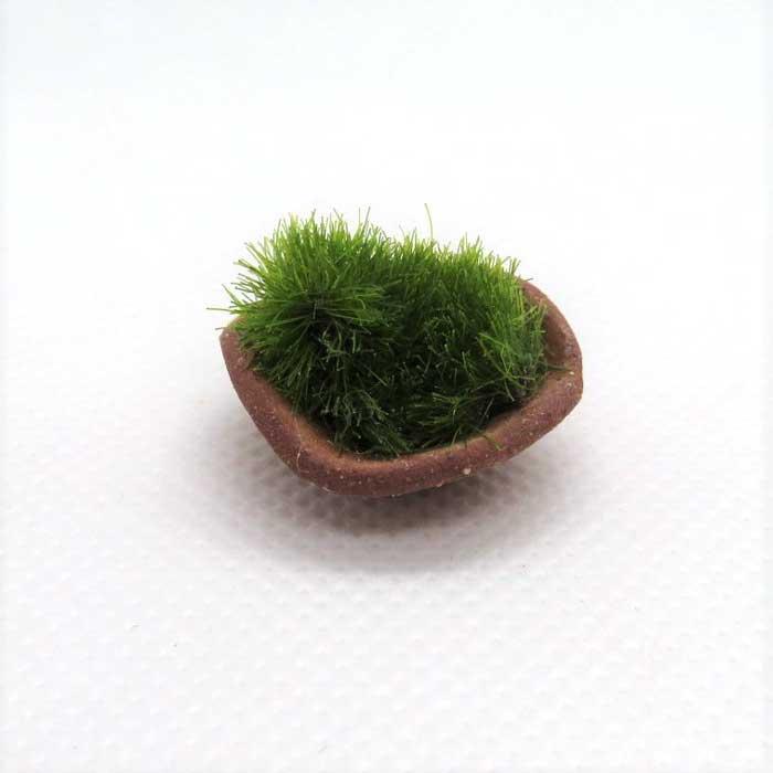 画像1: 苔鉢・テラコッタ