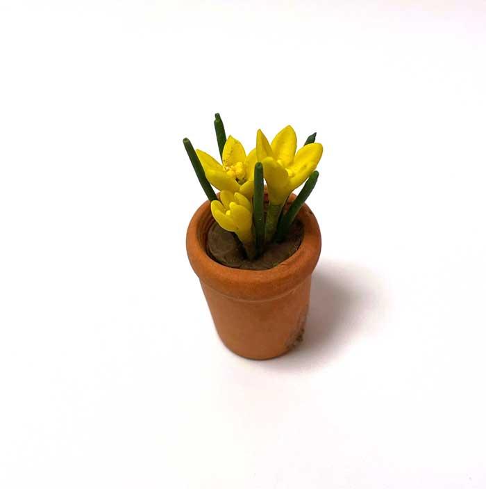 画像2: クロッカス鉢