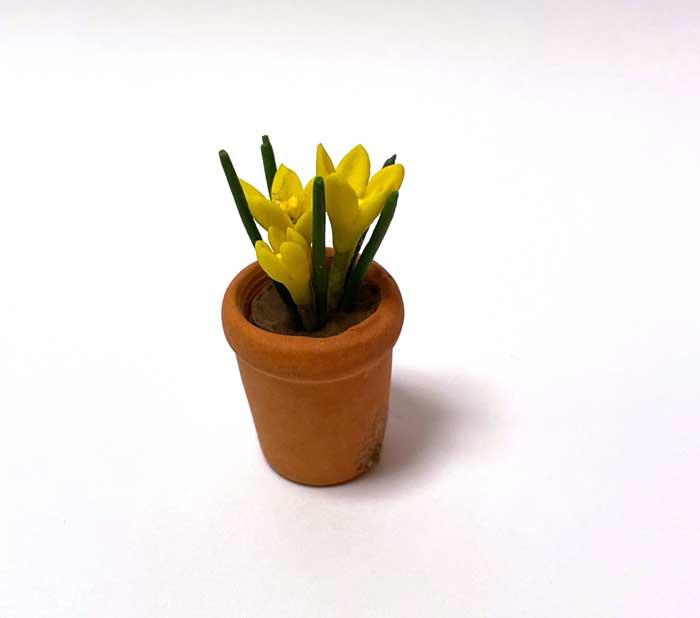 画像1: クロッカス鉢