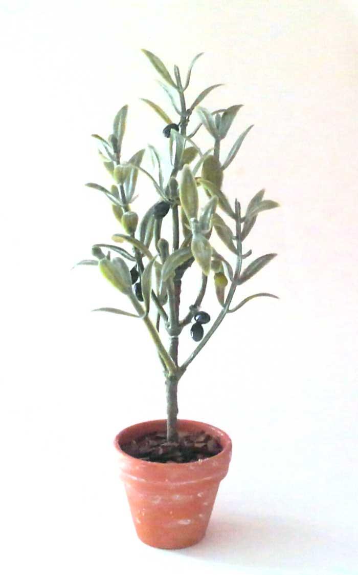 画像1: オリーブの木