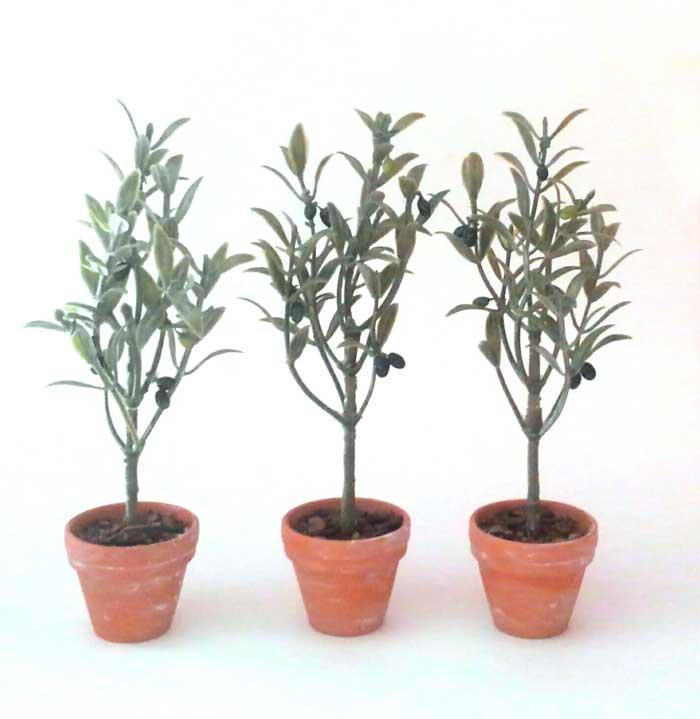 画像2: オリーブの木