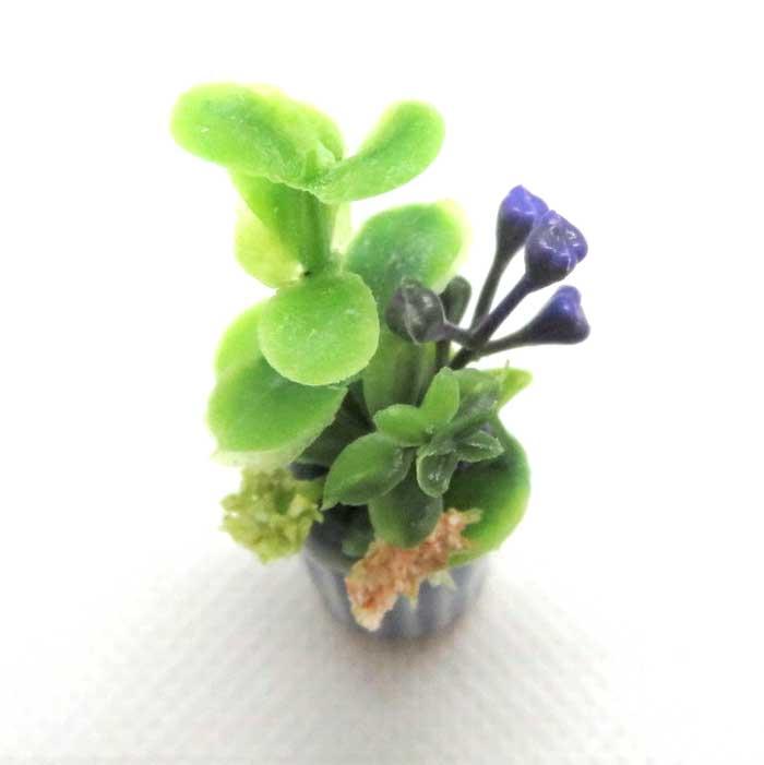 画像2: 寄せ植え・青鉢