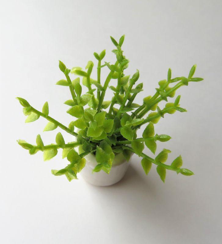 画像2: 観葉植物・丸葉